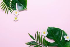 Rama tropikalni liście Monstera i palma na różowym tle przestrzeń dla teksta Odgórny widok, mieszkanie nieatutowy fotografia royalty free