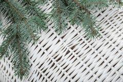 Rama verde del abeto para la Navidad Imagen de archivo
