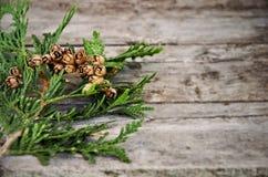 Rama verde del cedro en la tabla Foto de archivo libre de regalías