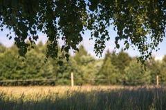 Rama verde del follaje contra marco del bosque, del prado y del cielo azul Imágenes de archivo libres de regalías
