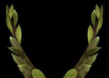 Rama verde del laurel en fondo negro Fotos de archivo libres de regalías