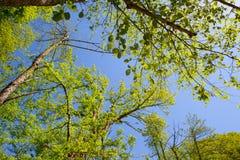 Rama verde en fondo del cielo azul Fotos de archivo
