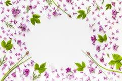Rama świezi bzów kwiaty i zielony chmiel opuszcza na bielu Zdjęcia Royalty Free
