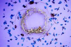 Rama wysuszeni kwiaty, menchie, Fotografia Royalty Free