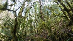 Rama y árbol cubiertos con el musgo en bosque almacen de metraje de vídeo