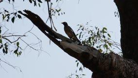 Rama y cielo de árbol metrajes