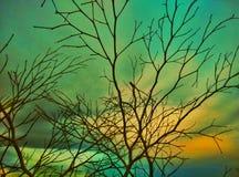 Rama y cielo secados de árbol Fotos de archivo