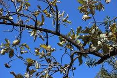 Rama y hojas imagenes de archivo