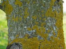 Rama y musgo interesantes de árbol Fotos de archivo