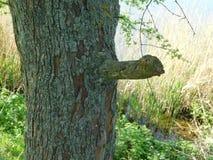 Rama y musgo interesantes de árbol Fotografía de archivo libre de regalías