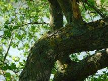 Rama y musgo interesantes de árbol Imágenes de archivo libres de regalías