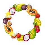 Rama z egzotycznymi tropikalnymi owoc Ilustracja azjatykcie rośliny ilustracja wektor