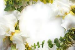 Rama z Irysowymi białymi kwiatami, pączki, zielony bluszcz rozgałęzia się Zdjęcia Stock