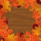 Rama z jesień kolorowymi liśćmi Fotografia Stock