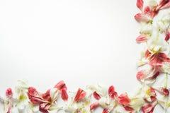 Rama Z Kolorowymi płatkami Na Białym tle Zdjęcie Royalty Free