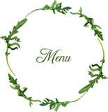 Rama z liśćmi arugula Obraz Royalty Free