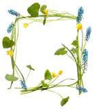 Rama z liśćmi, błękit i kolor żółty kwitnie Zdjęcie Royalty Free