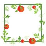 Rama z pietruszką, koper i pomidory Fotografia Stock