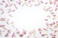 Rama Z Różowymi płatkami Na Białym tle Obrazy Stock