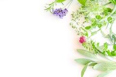 Rama ziele na białym tle obrazy stock