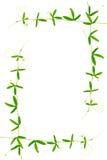 Rama zielony gałąź passionflower z tendrils odizolowywa Zdjęcie Stock