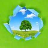 Rama zielony papier Fotografia Royalty Free