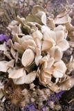Ramalhete abstrato de flores secadas, foco do borrão Fotografia de Stock Royalty Free