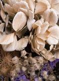 Ramalhete abstrato de flores secadas, foco do borrão Imagem de Stock
