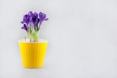Ramalhete agradável do açafrão no potenciômetro amarelo Espaço para o texto Fotografia de Stock