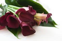 Ramalhete bonito Fotografia de Stock Royalty Free
