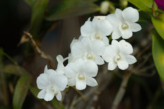 Ramalhete bonito branco das orquídeas imagens de stock