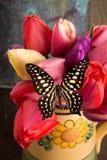 Ramalhete bonito das tulipas com borboleta Fotos de Stock