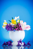 Ramalhete bonito de flores da mola Fotografia de Stock