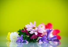 Ramalhete bonito de flores da mola Foto de Stock Royalty Free