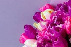 Ramalhete bonito de flores roxas cor-de-rosa coloridas frescas das tulipas no fundo cinzento imagem de stock