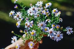 Ramalhete bonito de flores selvagens em uma mão fêmea na parte traseira do verde imagens de stock