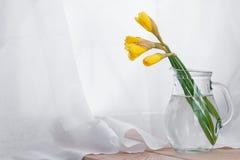 Ramalhete bonito de narcissuses amarelos em um jarro de vidro no fundo branco Lugar para o texto Mola feriados foto de stock