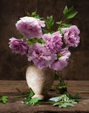Ramalhete bonito de peônias cor-de-rosa Fotografia de Stock