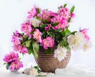 Ramalhete bonito de peônias cor-de-rosa e brancas Imagens de Stock Royalty Free