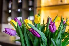 Ramalhete bonito de tulipas amarelas e roxas, close-up Imagens de Stock