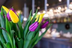 Ramalhete bonito de tulipas amarelas e roxas, close-up Imagem de Stock Royalty Free