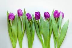 Ramalhete bonito de tulipas roxas no fundo branco Imagens de Stock Royalty Free