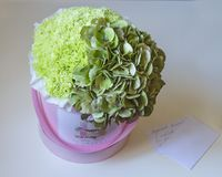 Ramalhete bonito do presente de hortênsias e de cravos verdes delicados em uma caixa cor-de-rosa no papel em um fundo branco foto de stock