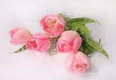 Ramalhete bonito do tulip Imagens de Stock Royalty Free