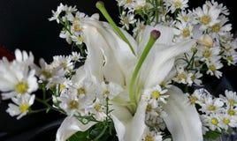 Ramalhete branco Fotografia de Stock