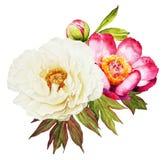 Ramalhete branco e vermelho da aquarela da flor das peônias ilustração do vetor