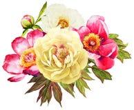 Ramalhete branco e vermelho da aquarela da flor das peônias ilustração royalty free