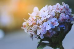 Ramalhete brilhante da manhã Imagem de Stock Royalty Free