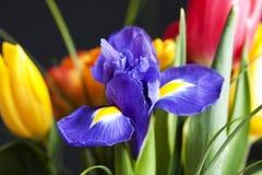 Ramalhete colorido da flor fotografia de stock