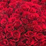 Ramalhete colorido da flor das rosas vermelhas para o uso como o fundo Imagens de Stock